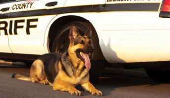 The inherently dangerous nature of attack-trained police K-9s